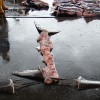Woman to again face Costa Rica court on shark finning charges