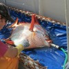 Scientists discover world's first warm-blooded fish
