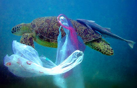 Roughly 8 million tons of plastics end up in the world's oceans each year, according to a University of Georgia study. (Flickr / thebiggoodbye)